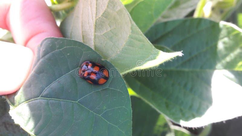 Insekt in den Blättern lizenzfreies stockfoto