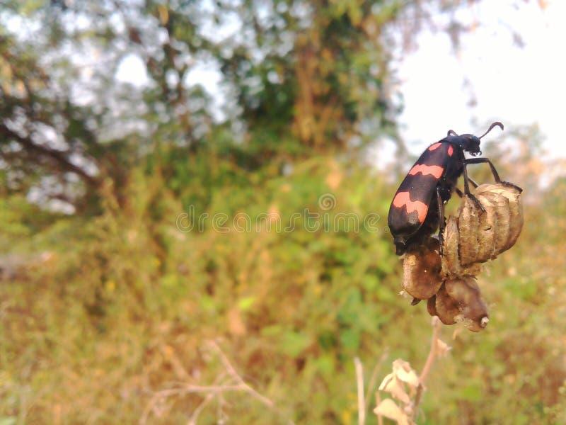 Insekt an der Natur stockfoto