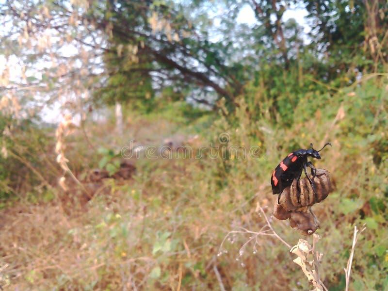 Insekt an der Natur stockbilder