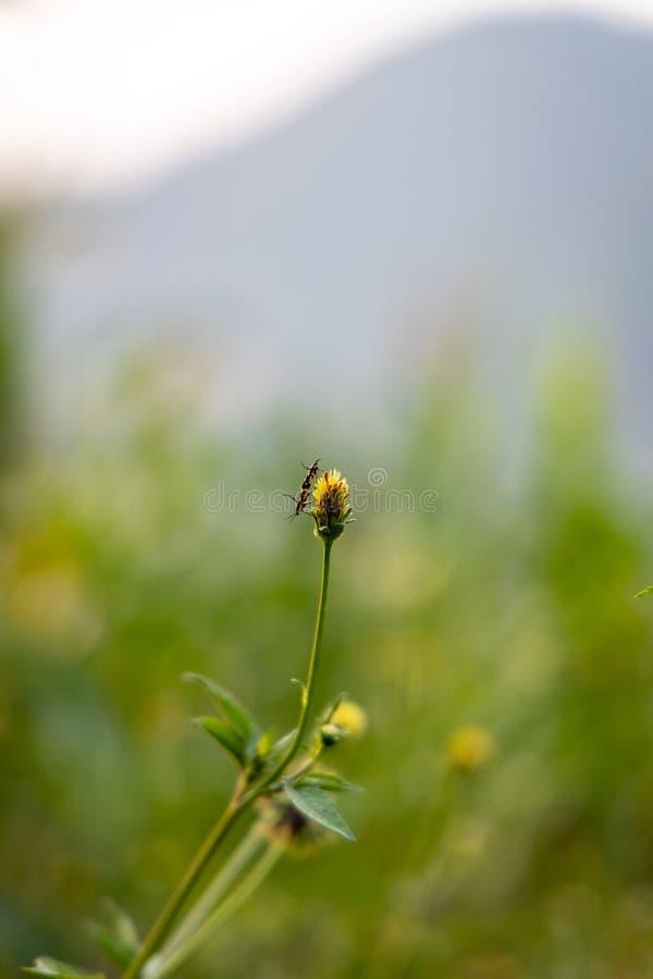 Insekt i dziki kwiat zdjęcie royalty free