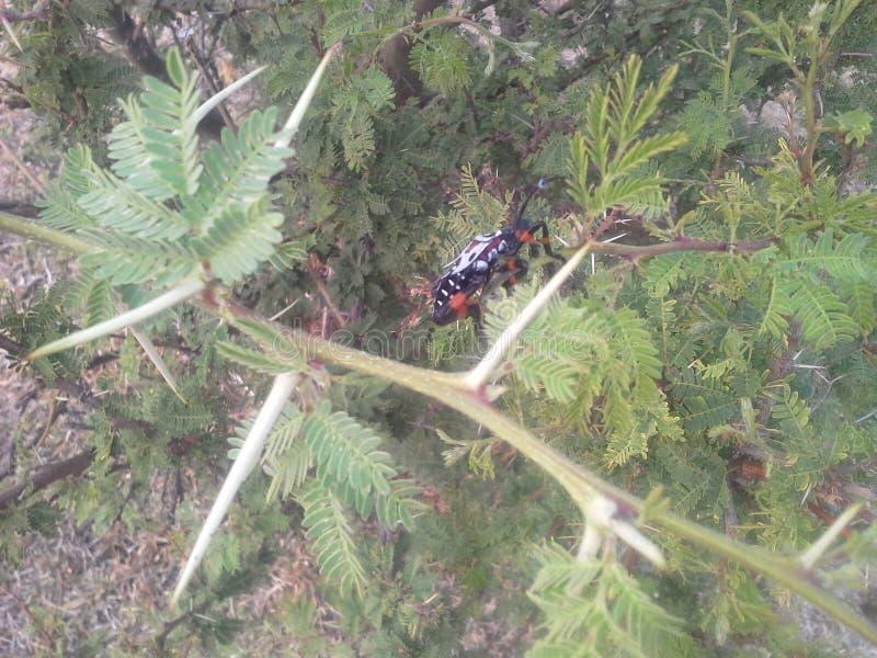 Insekt im dornigen Baum lizenzfreies stockfoto