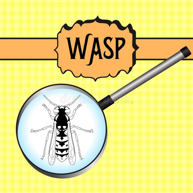 Insekt im Vergrößerungsglas wespe Skizze der Wespe wespe stock abbildung