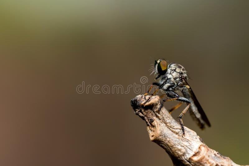 Insekt im Wald, Tiermakrofoto stockbilder
