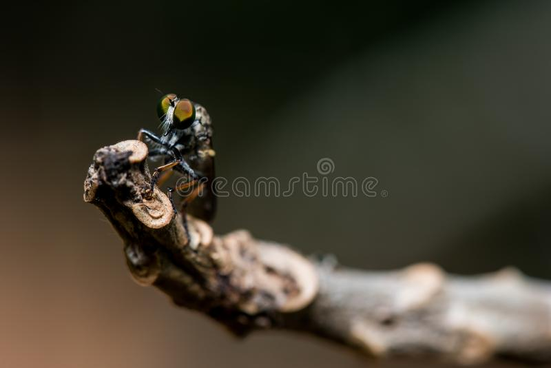 Insekt im Wald, Tiermakrofoto lizenzfreies stockfoto