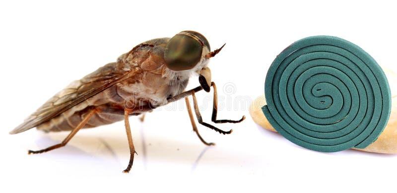 Insekt kontrola fotografia royalty free