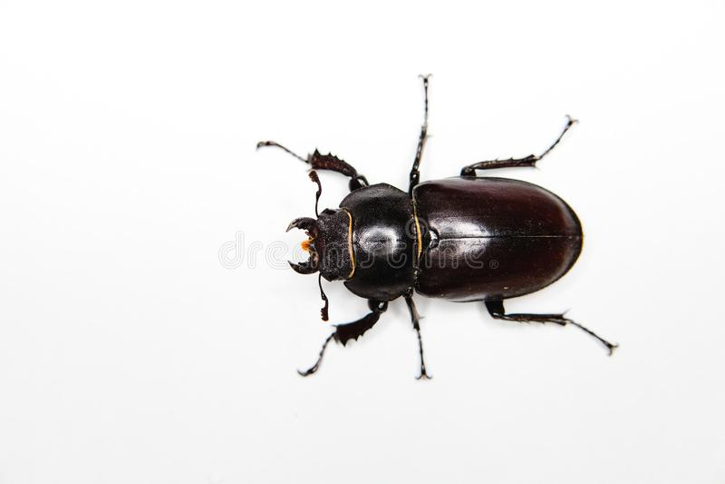 Insekt na białym tle - Sześć nóg zdjęcia stock