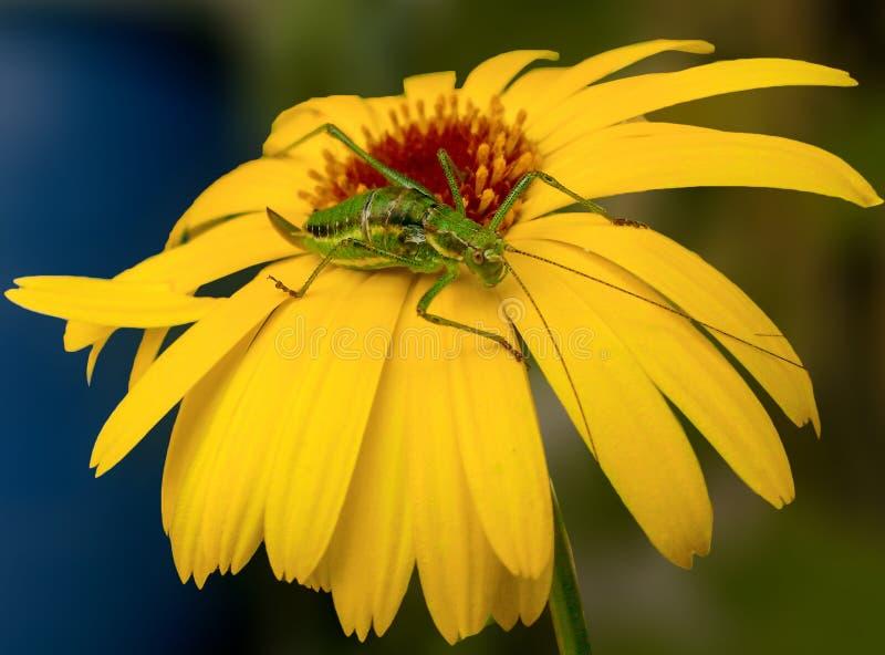 Download Insekt na kwiacie zdjęcie stock. Obraz złożonej z atki - 42525770