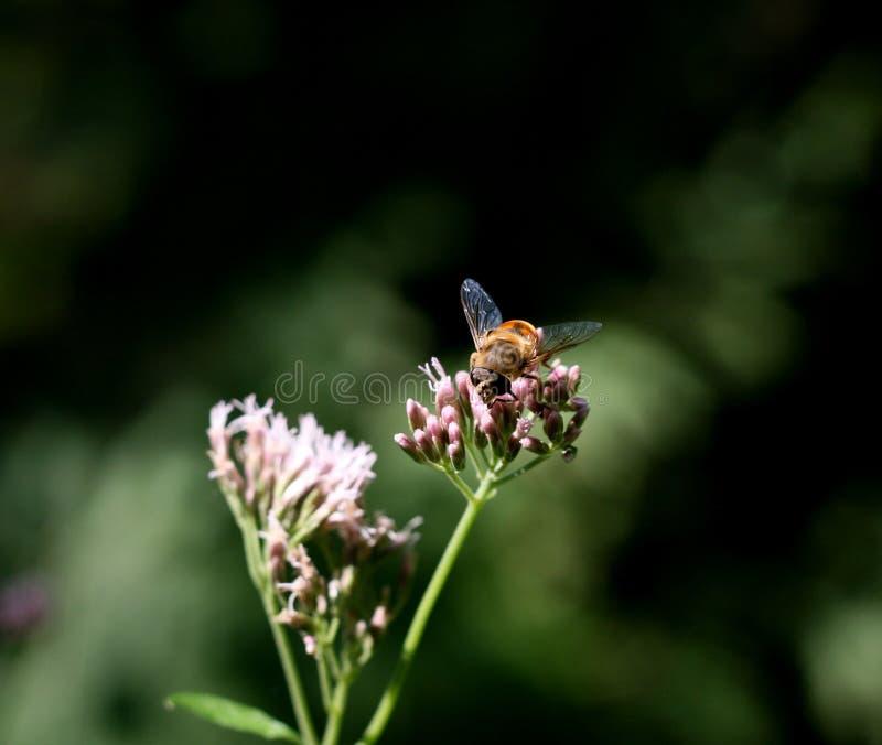 Insekt na kwiacie zdjęcie stock