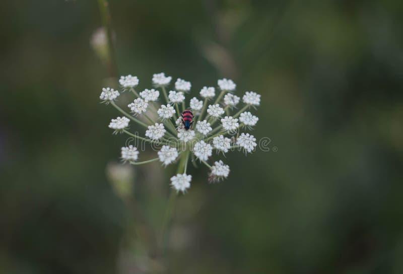Insekt na kwiacie w postaci serca, fotografia royalty free