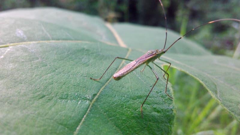 Insekt na urlopie zdjęcie stock