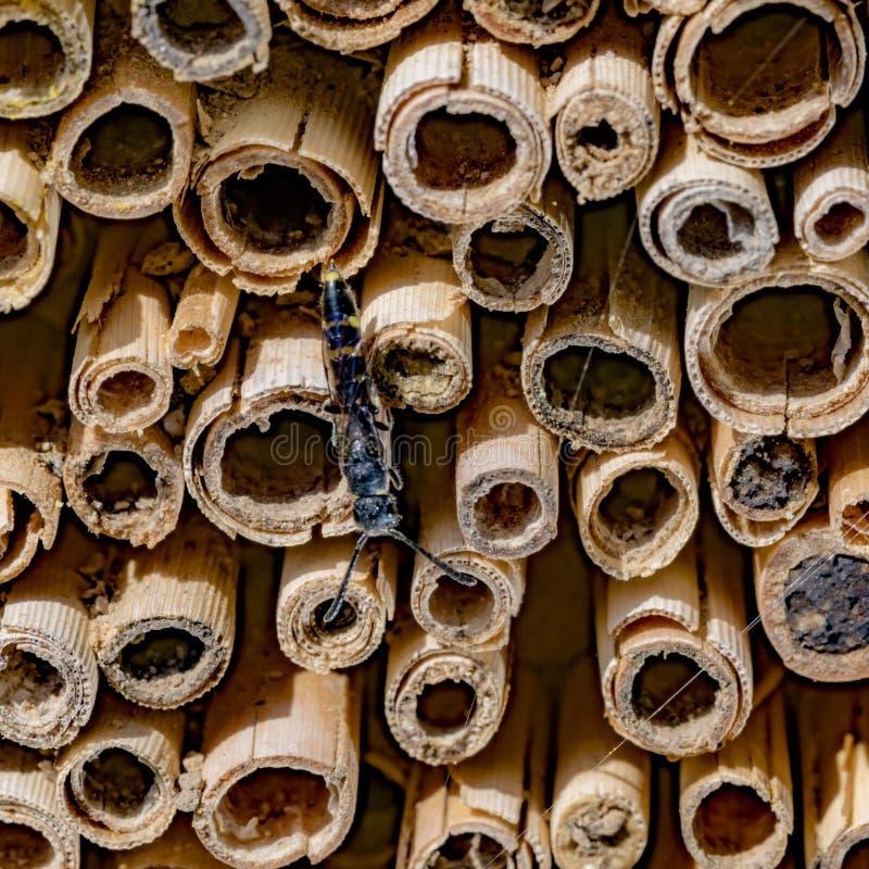 Insekt siedzi na ścianie odcinał trzcinowych słupy obraz stock