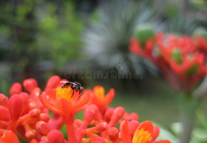 Insekt w pięknym ogródzie zdjęcie royalty free