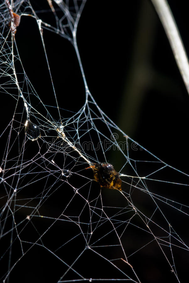 Insekt wurde es in der Seide des furchtsamen Erschreckens der Spinne eingewickelt lizenzfreies stockbild