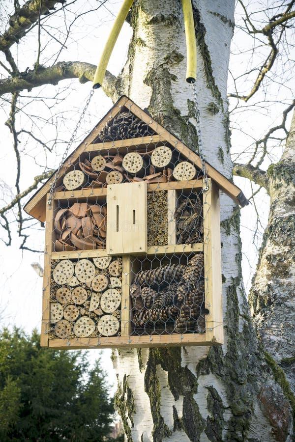 Insekta Domowy obwieszenie na drzewie zdjęcia stock
