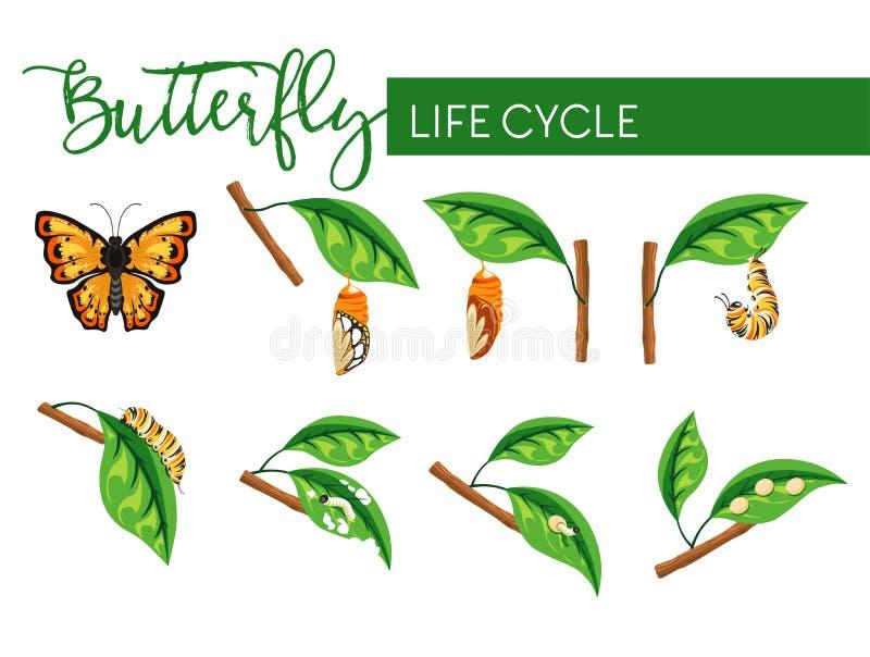 Insekta etap ?ycia larwy motylia transformacja odizolowywa? sceny ilustracji