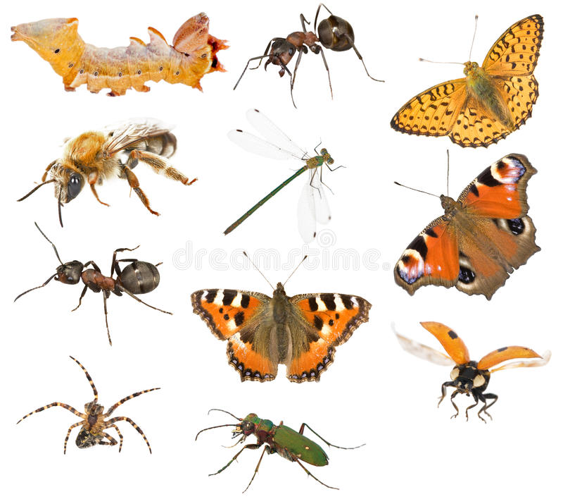 insekta inkasowy macro obraz royalty free