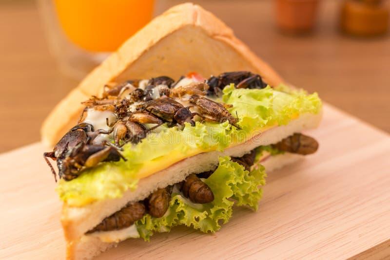 Insekta jedzenie zdjęcia royalty free