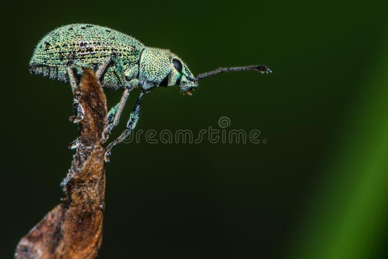 Insekta latanie zdjęcie stock