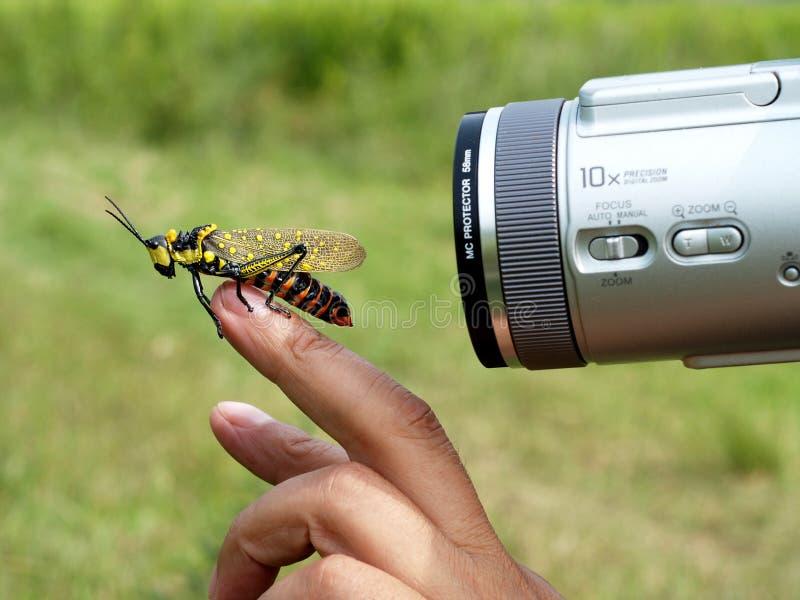 insekta model fotografia stock