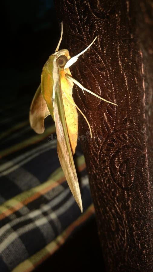 Insekta underhome nightclick fotografia obraz royalty free