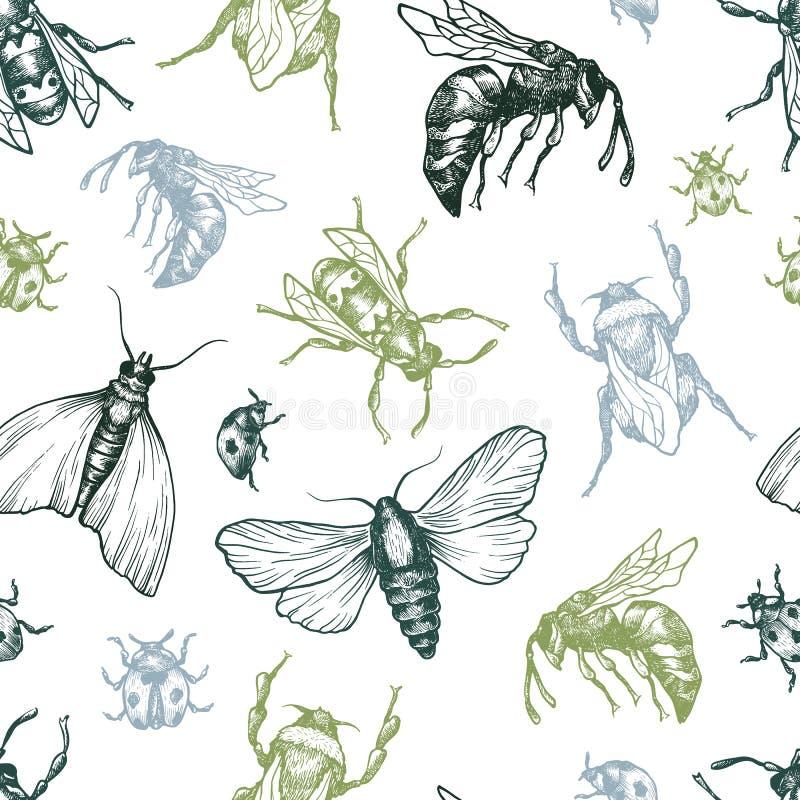 Insekta wzór ilustracja wektor