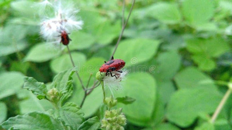 insekte lizenzfreie stockfotografie