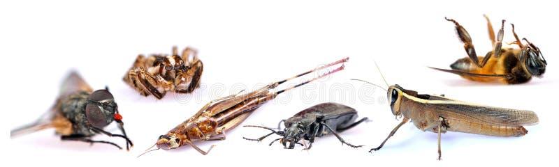 Insekte lizenzfreie stockbilder