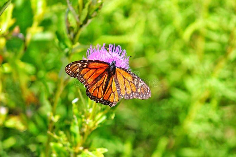 Insekte und Blumen stockfoto