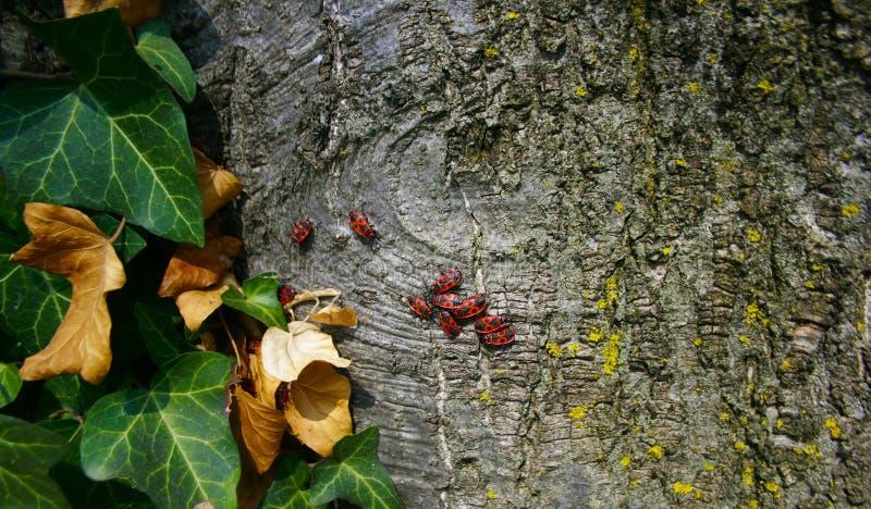 Insekten auf Baum lizenzfreie stockbilder