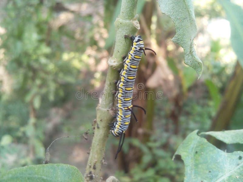 Insekten auf dem Baum stockfoto