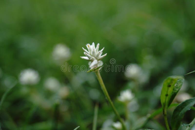 Insekten-Blume lizenzfreie stockfotografie