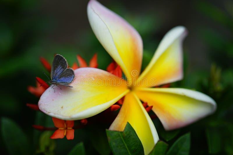 Insekten-Blume stockfotos