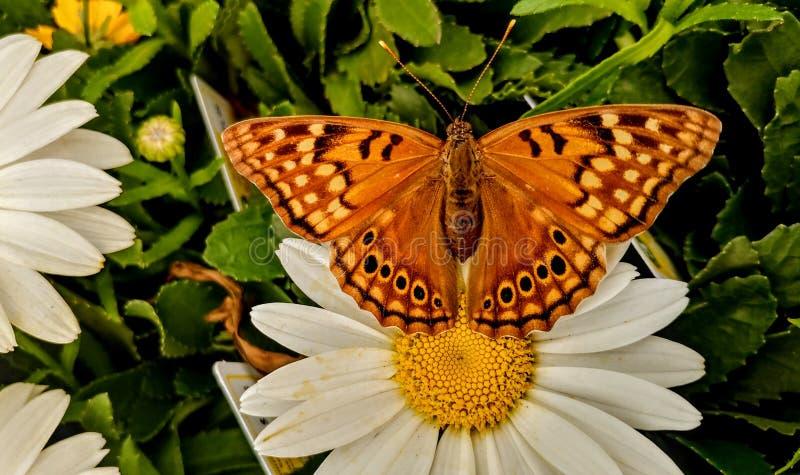 Insekten des Frühlinges stockfotografie