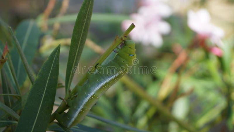 Insekten - Kumbhalgarh-Fort stockbild