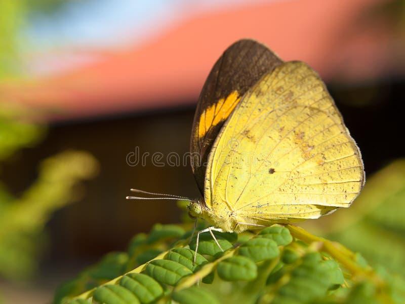 Insekten, Schmetterlinge, auf einem Glied lizenzfreie stockfotos