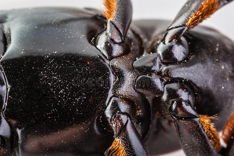 Insektenbauch stockfotos