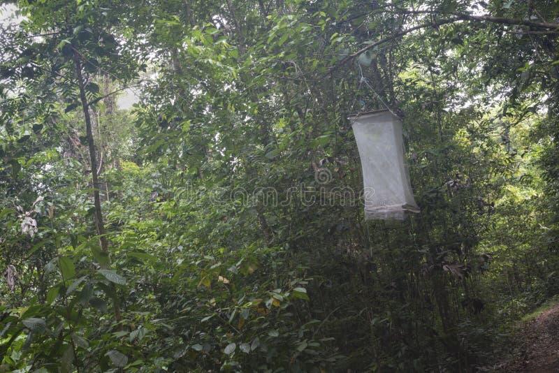 Insektenfalle, Franz?sisch-Guayana lizenzfreie stockfotografie