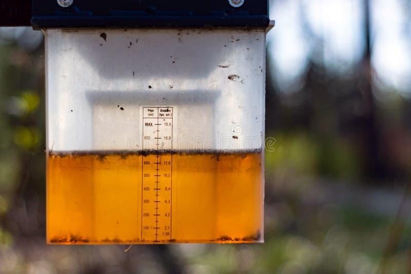 Insektenfalle mit Insektenvertilgungsmittel im Behälter Tote Insekte lizenzfreies stockbild