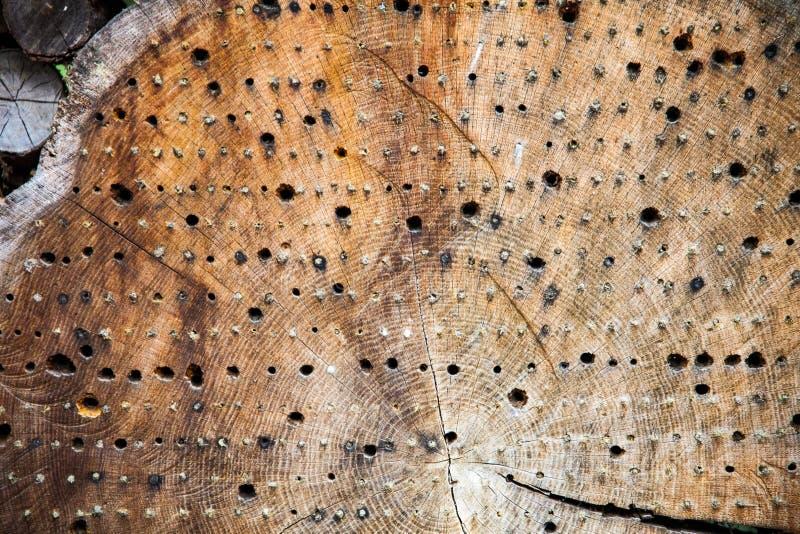 Insektenhotel gemacht von einem Baumstamm lizenzfreie stockfotografie