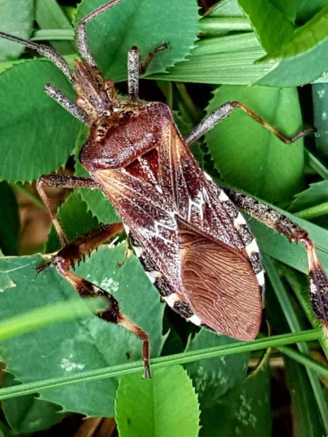 Insektenleben lizenzfreies stockbild