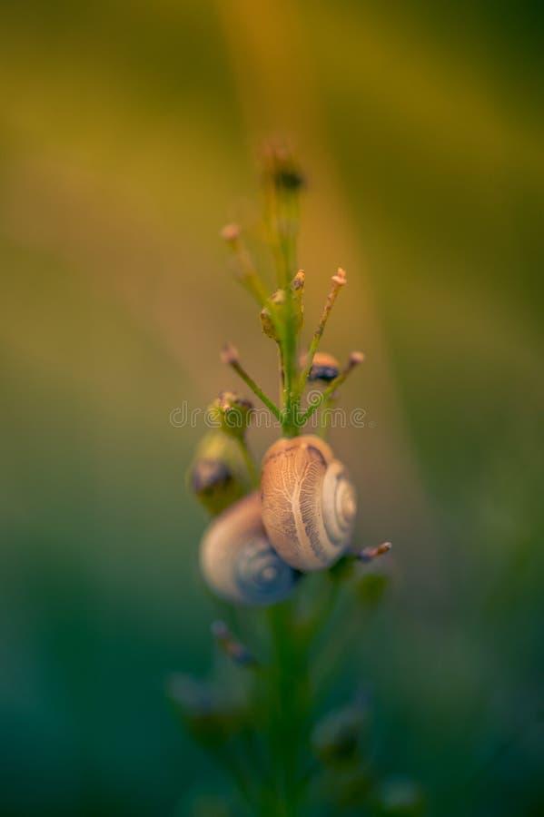Insektenmolluskenpaare, die auf einer Grünpflanze in der Farbe mit weichem Licht und dunkelblauer Farbe stillstehen lizenzfreie stockbilder