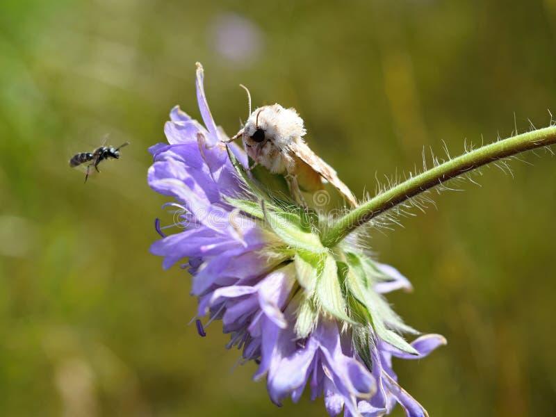 Insektentreffen stockbilder