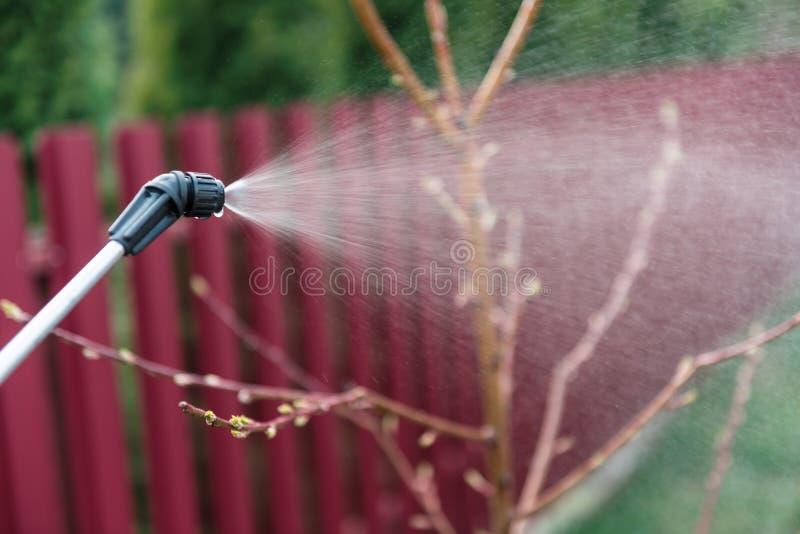 insektenvertilgungsmittel stockbilder