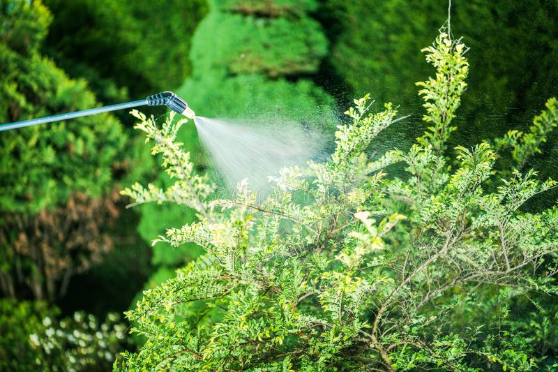 Insektenvertilgungsmittel im Garten stockfoto