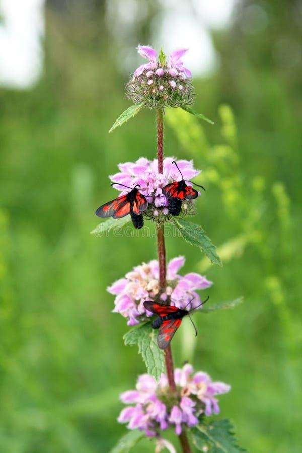 Insekty na łąkowych kwiatach fotografia stock