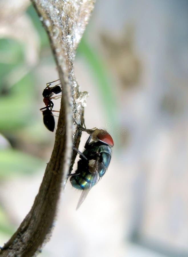 Insekty w przeciwnej stronie zdjęcie stock