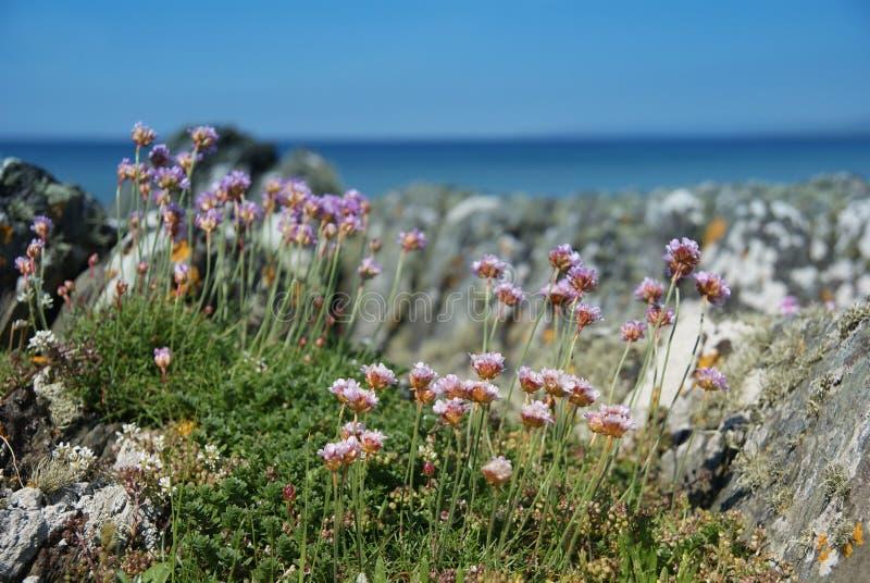 Insel der Gigha Küstenlinie-Blumen stockfotografie