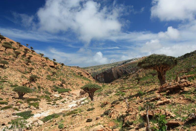 Insel Homhil/des Socotra stockfotos