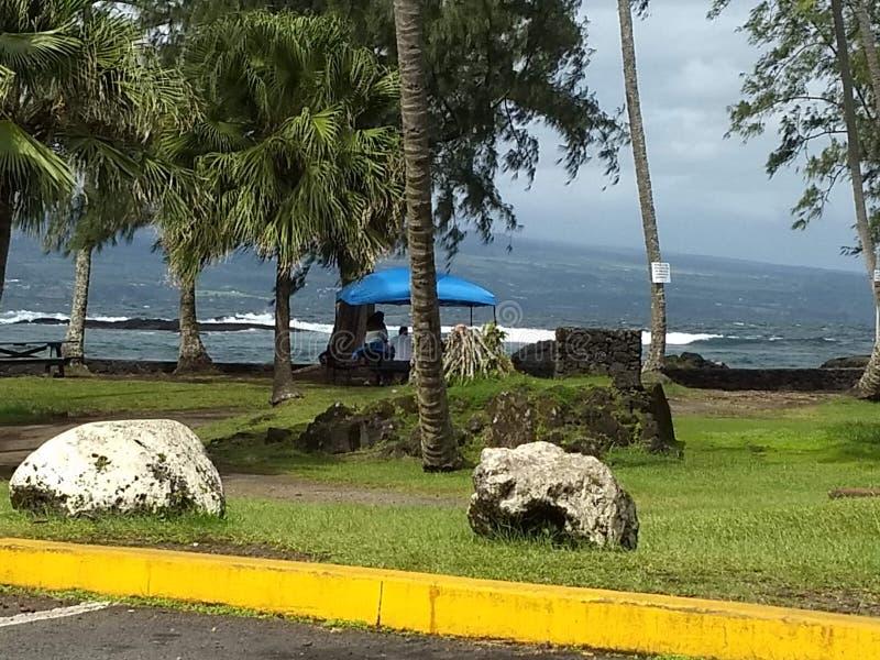 Insel-Ozeanbäume Hawaiis große stockbilder