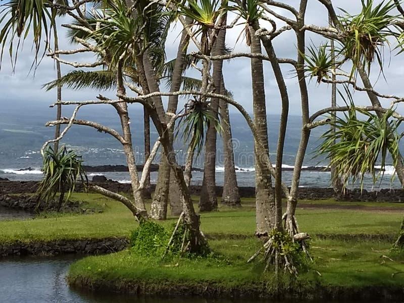 Insel-Ozeanbäume Hawaiis große lizenzfreies stockfoto